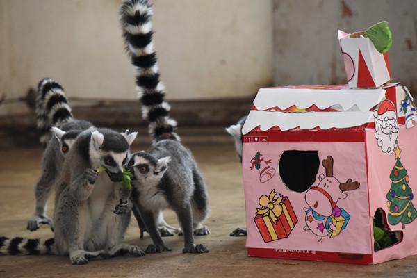 哈尔滨北方森林动物园举办动物圣诞派对